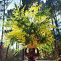 mimosa yurtao