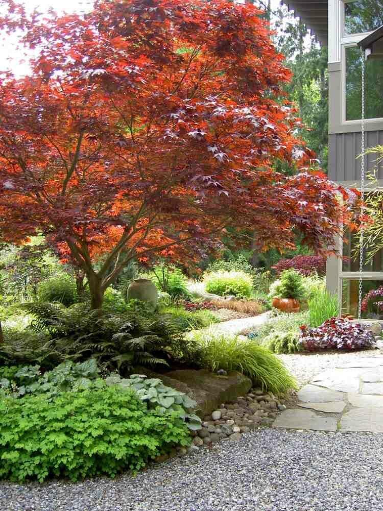 érable-Japon-herbe-Japon-fougère-jardin-contemporain - Photo de ...