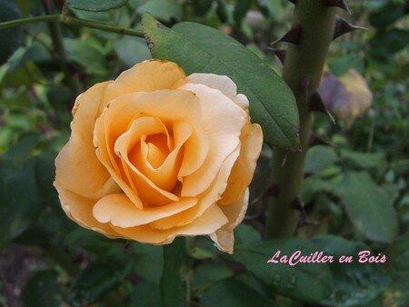 jardin_03