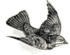 dictionbirdgfairy004b