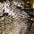 Au fil de l'eau (4)