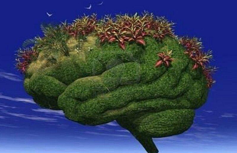 cerveau-jardin
