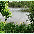 Lac Mimizan 0505153