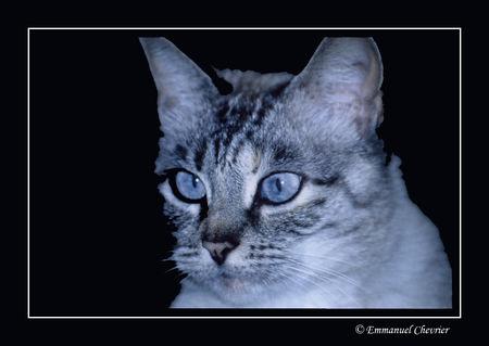 lola_18_11_2008_retouche_photo_papier_1