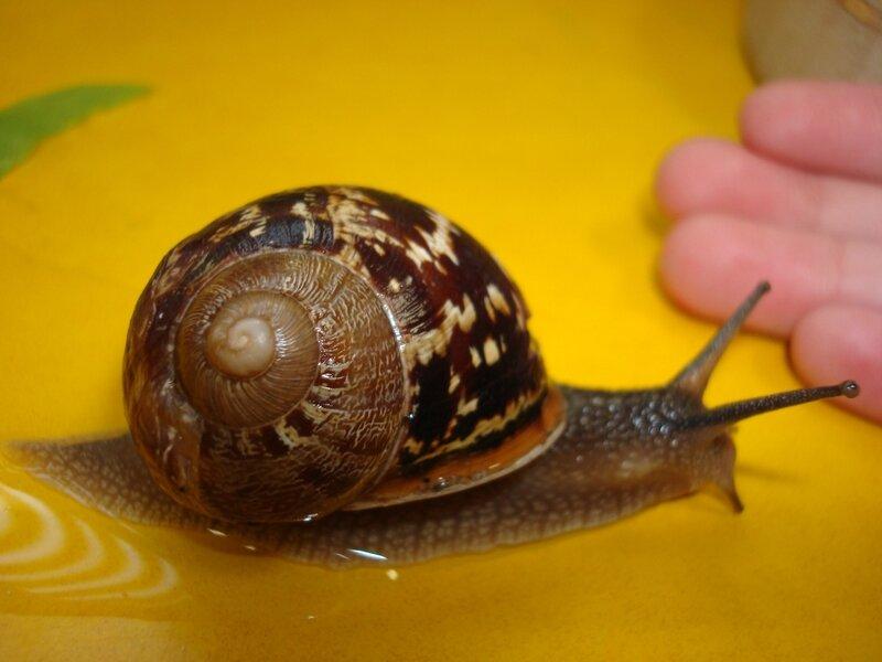 escargots 2009 (6)