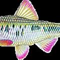 Tubes poissons d'avril
