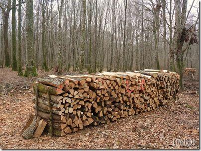 bois de chauffage- route Madame - janvier,février 2011