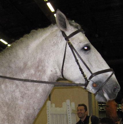 salon_du_cheval