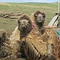 Russie-mongolie : petit bonus !