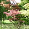 Arboretum Vallée aux Loups 063