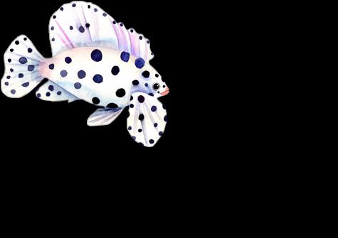 tube poissons 16