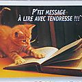 Animaux - Chat