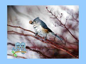 bel oiseau 5
