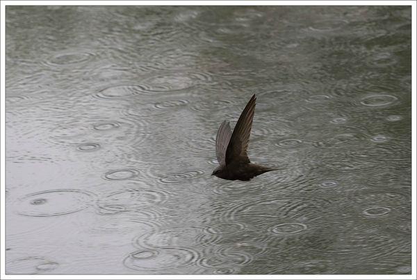 ville martinet pluie 4 200513 oeil