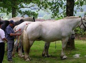 chevaux___parures