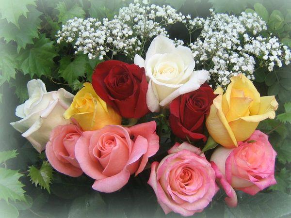 roses_bouquet_3553