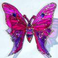 2010_0801papillon-1aout-100028