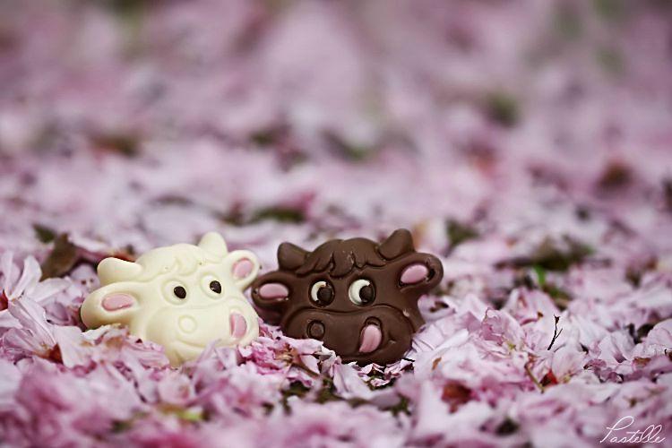 Chocolatsretour_12 14 04_6425
