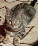 Adoption_Marianne_chatte_avril_2009___2