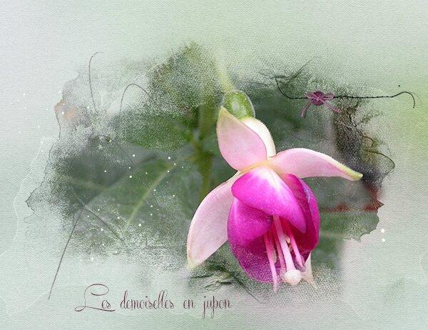 Demoiselle-en-jupon---Fuchsia-600