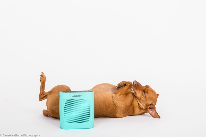 bose bluetooth soundlink color