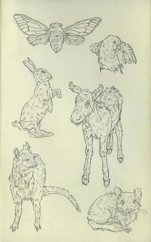 animaux empaillés18