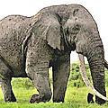 Big tim et ses défenses géantes : l'extinction des espèces sous nos yeux…