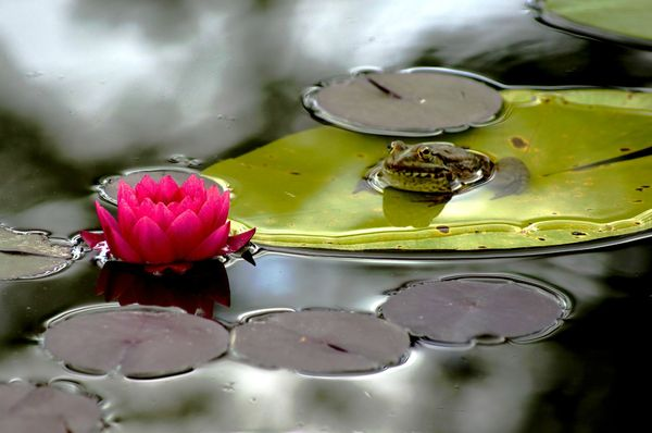 Botanique 2 du 10 07 2012 014