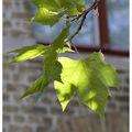 bruges_feuilles
