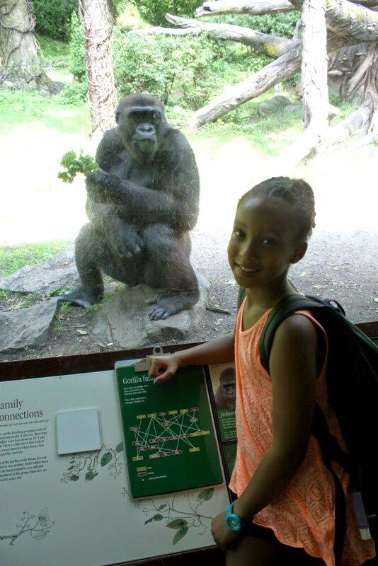 J11 - 08 juillet 2014 - zoo du Bronx (51).JPG