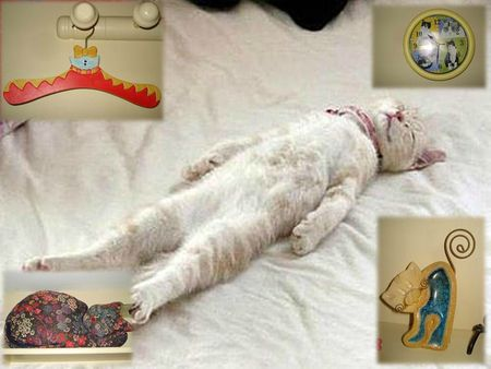 COLLEC CATS (37)