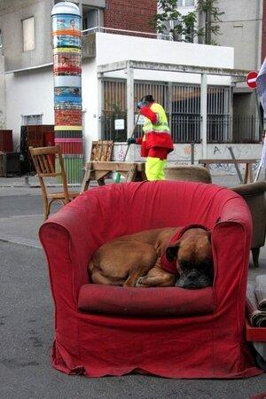 2_fauteuil__chien__balayeur_6967