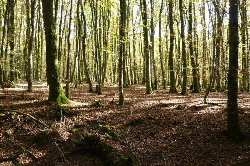 005 Forêt sur le chemin conduisant à Faubouloin
