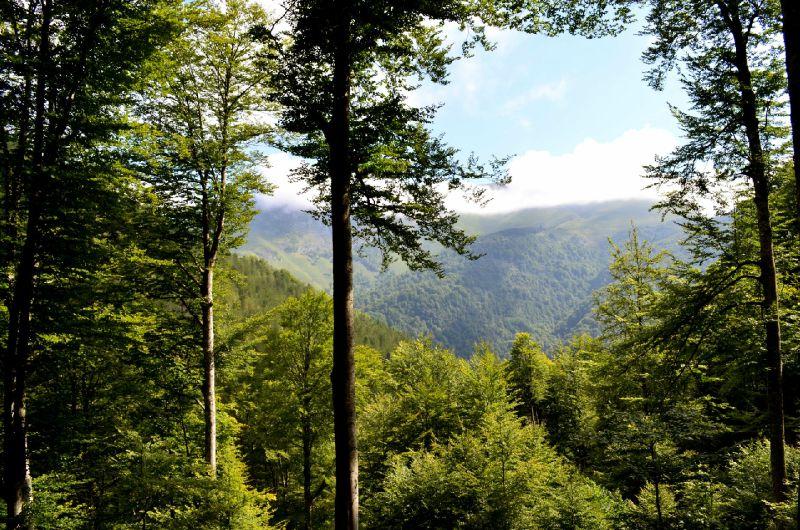 Vue sur bois du Layens et Layens depuis Mailh de Castillon...