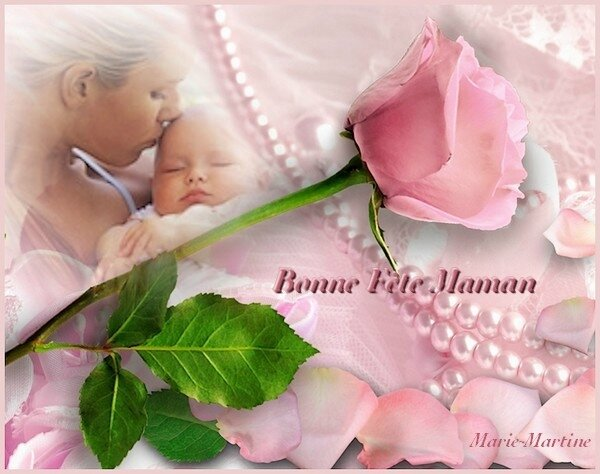 rose bb