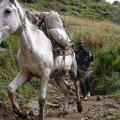 Les montagnes du Simien