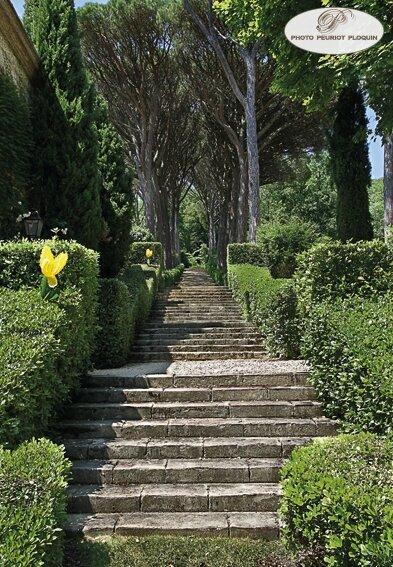 LISLE_SUR_TARN_Chateau_de_Saurs_le_jardin_l_allee_des_pins_parasols
