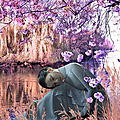 Cerisiers roses