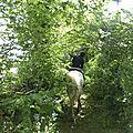 balade à cheval médiévale - Abbaye de Hambye (67)