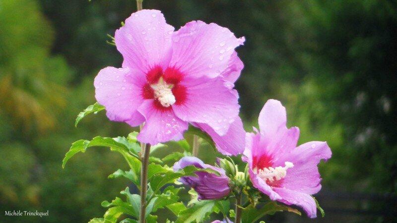 Fleurs de Léon 2008163