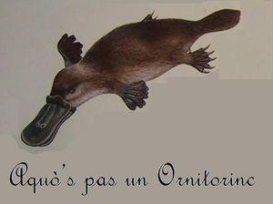 Aquo_s_pas_un_ornitorinc