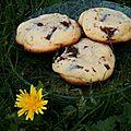 Cookies au chocolat... la recette marc grossman (+ réflexion sur les programmes télé des vacances)