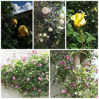 Jardin fin mai 2018 (7)
