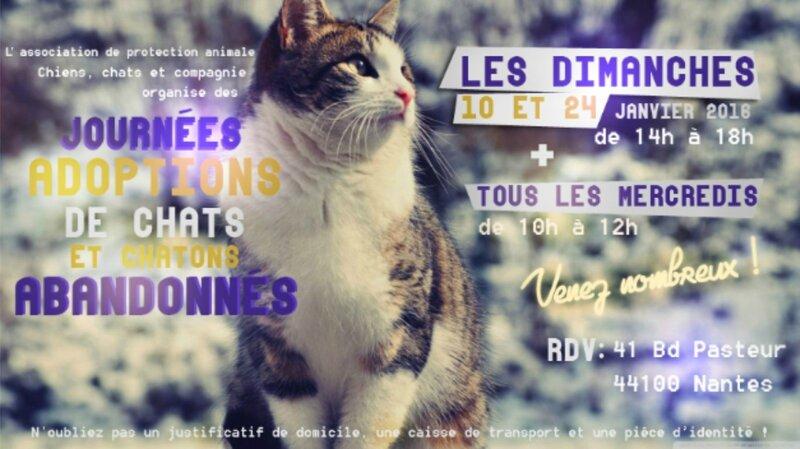 Asso Chiens Chats et Cie à Nantes