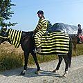 Jeux équestres manchots 2013 (37)