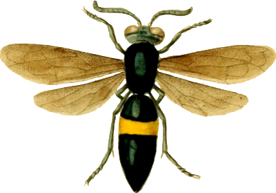 IMG CC0 INSECT OPENCLIPART 263002