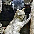 LA ROMIEU (Gers) Les chats 28 avril 2016 (1a)