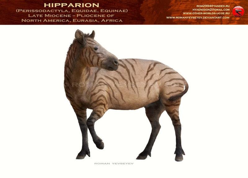 hipparion3