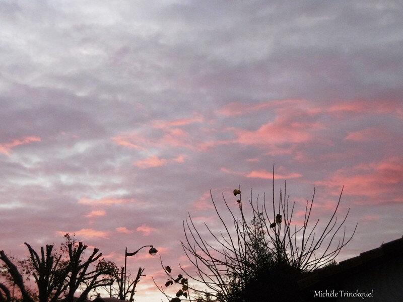 Lever de soleil et Cygnes 271118