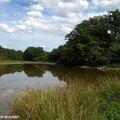 Le bout extrème de l'étang